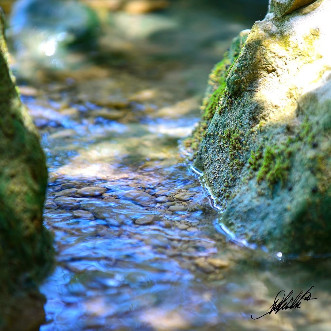 Water with Rocks and Green Stuff1080